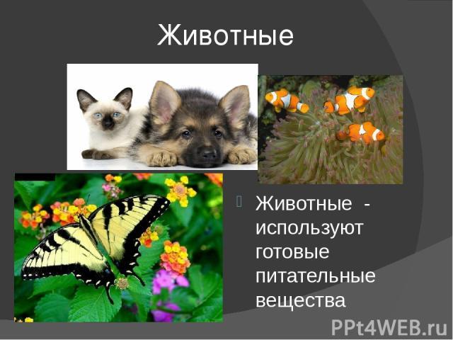 Животные Животные - используют готовые питательные вещества