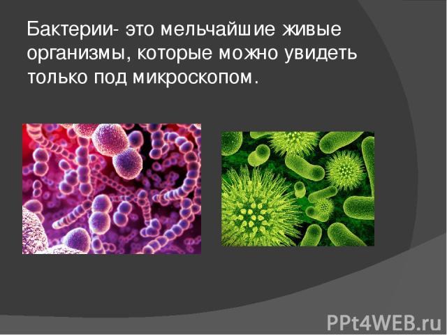Бактерии- это мельчайшие живые организмы, которые можно увидеть только под микроскопом.