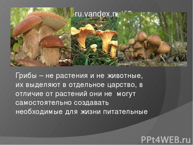 Грибы – не растения и не животные, их выделяют в отдельное царство, в отличие от растений они не могут самостоятельно создавать необходимые для жизни питательные вещества, питаются за счет других. http://im6-tub-ru.yandex.net/i?id=23279 http://im6-t…