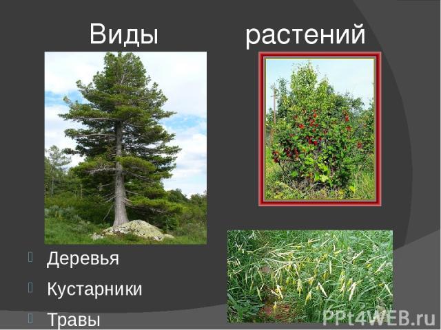 Виды растений Деревья Кустарники Травы