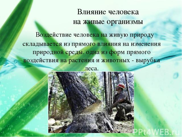 Влияние человека на живые организмы Воздействие человека на живую природу складывается из прямого влияния на изменения природной среды. одна из форм прямого воздействия на растения и животных - вырубка леса.