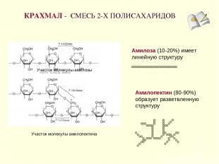 КРАХМАЛ - СМЕСЬ 2-Х ПОЛИСАХАРИДОВ * Амилоза (10-20%) имеет линейную структуру Ам