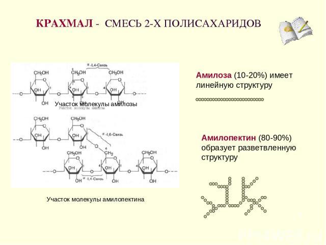 КРАХМАЛ - СМЕСЬ 2-Х ПОЛИСАХАРИДОВ * Амилоза (10-20%) имеет линейную структуру Амилопектин (80-90%) образует разветвленную структуру Участок молекулы амилозы Участок молекулы амилопектина