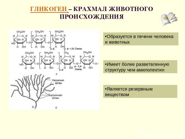 ГЛИКОГЕН – КРАХМАЛ ЖИВОТНОГО ПРОИСХОЖДЕНИЯ * Является резервным веществом Образуется в печени человека и животных Имеет более разветвленную структуру чем амилопектин
