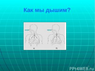 * Как мы дышим?