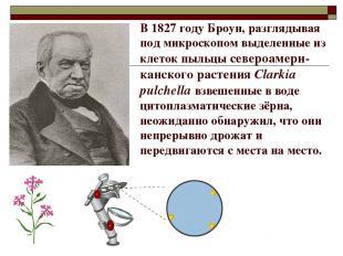 В 1827 году Броун, разглядывая под микроскопом выделенные из клеток пыльцы север