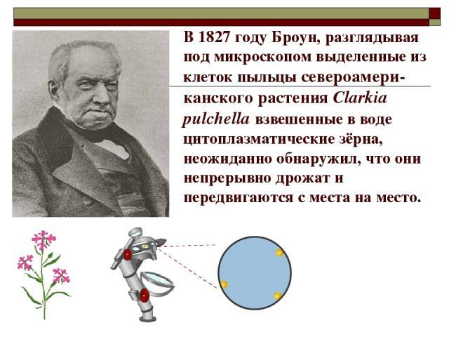 В 1827 году Броун, разглядывая под микроскопом выделенные из клеток пыльцы североамери-канского растения Clarkia pulchella взвешенные в воде цитоплазматические зёрна, неожиданно обнаружил, что они непрерывно дрожат и передвигаются с места на место.