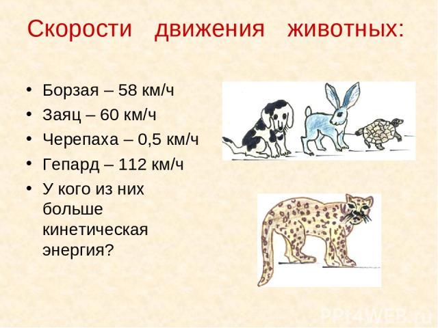 Скорости движения животных: Борзая – 58 км/ч Заяц – 60 км/ч Черепаха – 0,5 км/ч Гепард – 112 км/ч У кого из них больше кинетическая энергия?
