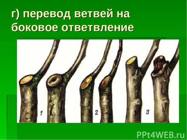 г) перевод ветвей на боковое ответвление