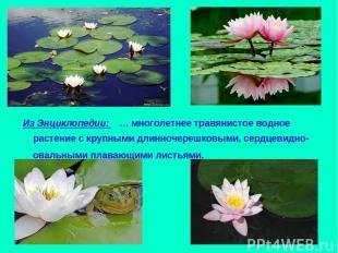 Из Энциклопедии: … многолетнее травянистое водное растение с крупными длинночере