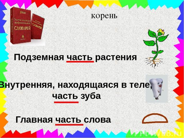 корень Подземная часть растения Внутренняя, находящаяся в теле, часть зуба Главная часть слова
