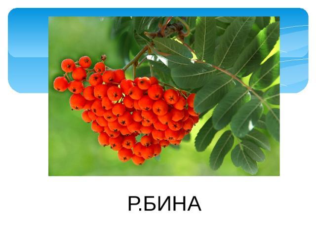Р.БИНА