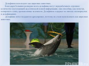 Дельфинов используют как цирковых животных. Благодаря большим размерам мозга дел