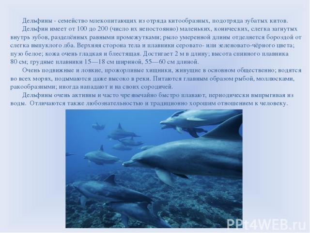 Дельфины - семейство млекопитающих из отряда китообразных, подотряда зубатых китов. Дельфин имеет от 100 до 200 (число их непостоянно) маленьких, конических, слегка загнутых внутрь зубов, разделённых равными промежутками; рыло умеренной длины отделя…