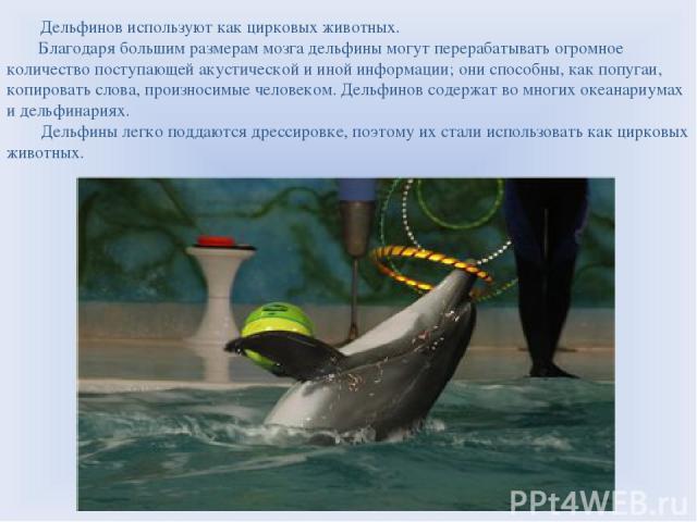 Дельфинов используют как цирковых животных. Благодаря большим размерам мозга дельфины могут перерабатывать огромное количество поступающей акустической и иной информации; они способны, как попугаи, копировать слова, произносимые человеком. Дельфинов…