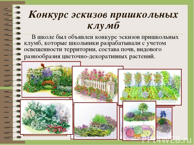 Конкурс эскизов пришкольных клумб В школе был объявлен конкурс эскизов пришкольных клумб, которые школьники разрабатывали с учетом освещенности территории, состава почв, видового разнообразия цветочно-декоративных растений.