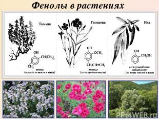 Фенолы в растениях