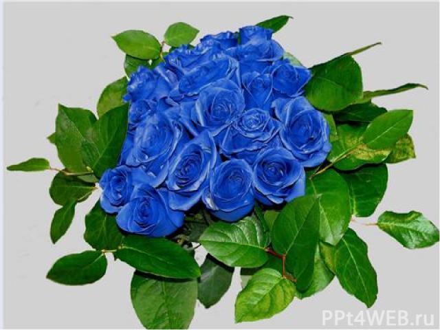 Химия Соединения, какого металла, почти все окрашены в голубой цвет? Ответ: Медь Медный купорос