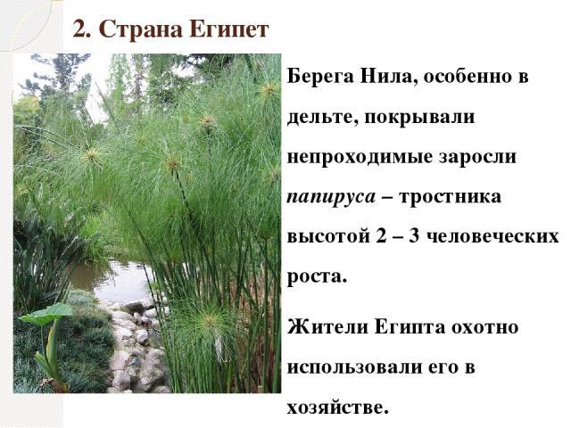 2. Страна Египет Берега Нила, особенно в дельте, покрывали непроходимые заросли папируса – тростника высотой 2 – 3 человеческих роста. Жители Египта охотно использовали его в хозяйстве.