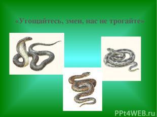 «Угощайтесь, змеи, нас не трогайте»