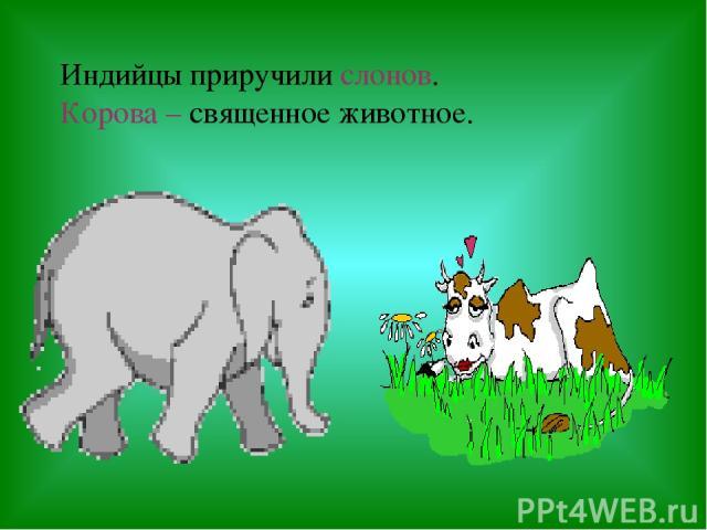 Индийцы приручили слонов. Корова – священное животное.
