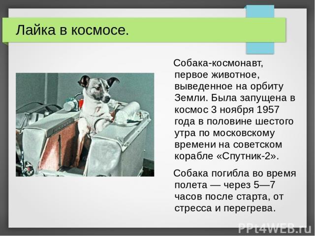 Лайка в космосе. Собака-космонавт, первое животное, выведенное на орбиту Земли. Была запущена в космос 3 ноября 1957 года в половине шестого утра по московскому времени на советском корабле «Спутник-2». Собака погибла во время полета — через 5—7 час…