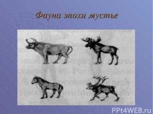 Фауна эпохи мустье