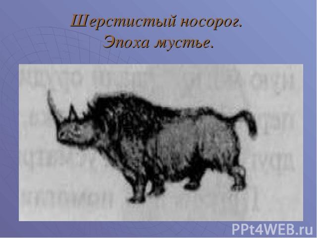 Шерстистый носорог. Эпоха мустье.