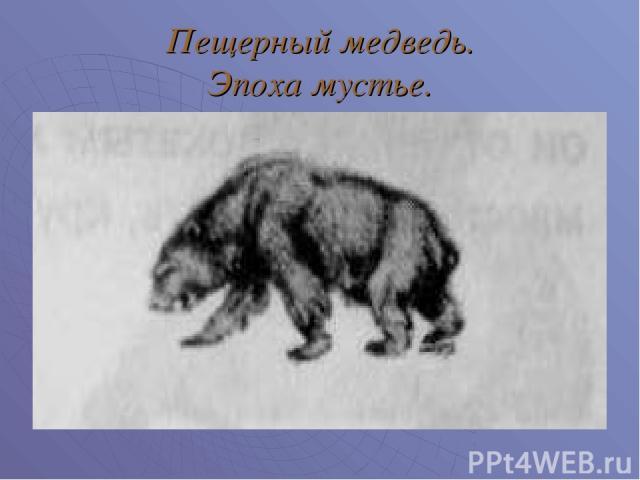 Пещерный медведь. Эпоха мустье.