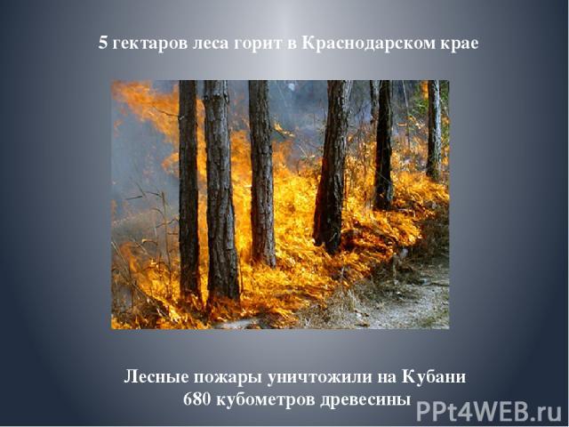 Лесные пожары уничтожили на Кубани 680 кубометров древесины 5 гектаров леса горит в Краснодарском крае