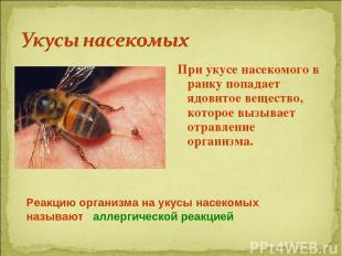 При укусе насекомого в ранку попадает ядовитое вещество, которое вызывает отравл