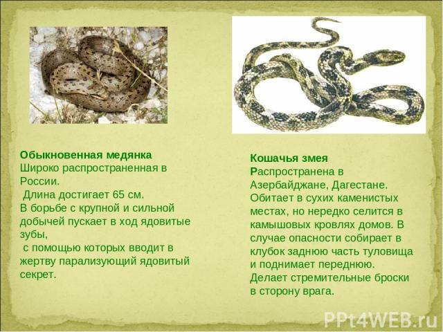 Обыкновенная медянка Широко распространенная в России. Длина достигает 65 см. В борьбе с крупной и сильной добычей пускает в ход ядовитые зубы, с помощью которых вводит в жертву парализующий ядовитый секрет. Кошачья змея Распространена в Азербайджан…