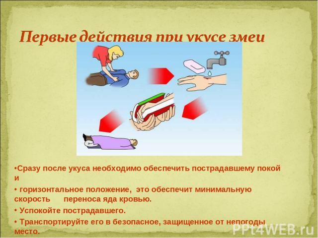 Сразу после укуса необходимо обеспечить пострадавшему покой и горизонтальное положение, это обеспечит минимальную скорость переноса яда кровью. Успокойте пострадавшего. Транспортируйте его в безопасное, защищенное от непогоды место.