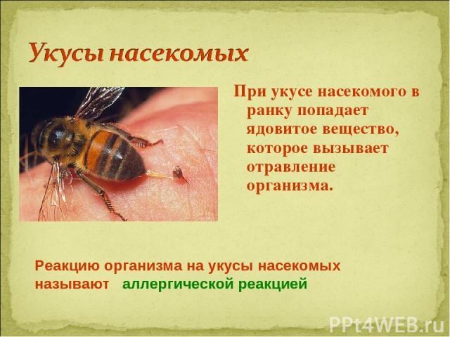При укусе насекомого в ранку попадает ядовитое вещество, которое вызывает отравление организма. Реакцию организма на укусы насекомых называют аллергической реакцией