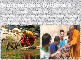 Милосердие в буддизме Всё учение буддизма построено на сострадании ко всем живым