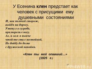 У Есенина клен предстает как человек с присущими ему душевными состояниями И, ка