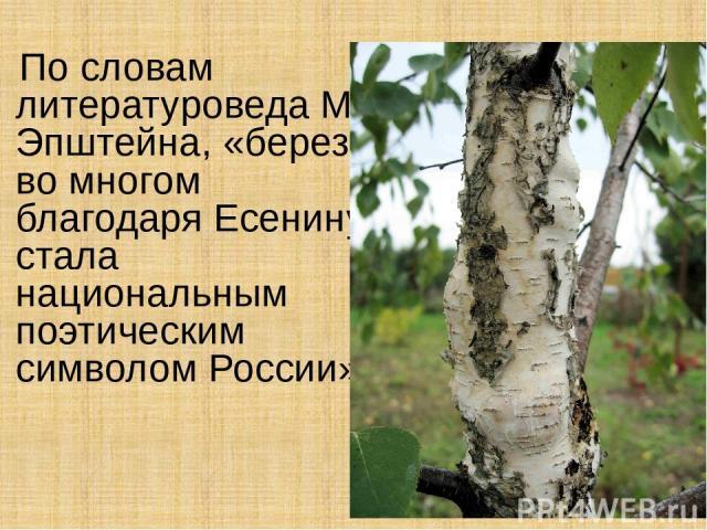 По словам литературоведа М. Эпштейна, «береза во многом благодаря Есенину стала национальным поэтическим символом России»