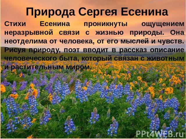 Природа Сергея Есенина Стихи Есенина проникнуты ощущением неразрывной связи с жизнью природы. Она неотделима от человека, от его мыслей и чувств. Рисуя природу, поэт вводит в рассказ описание человеческого быта, который связан с животным и раститель…