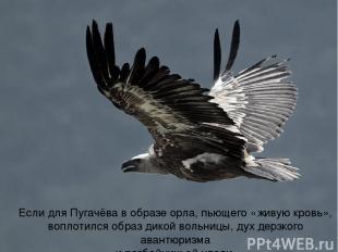 Если для Пугачёва в образе орла, пьющего «живую кровь», воплотился образ дикой в