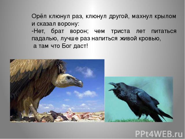 Орёл клюнул раз, клюнул другой, махнул крылом и сказал ворону: -Нет, брат ворон; чем триста лет питаться падалью, лучше раз напиться живой кровью, а там что Бог даст!