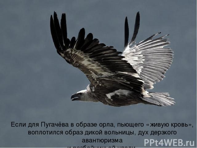Если для Пугачёва в образе орла, пьющего «живую кровь», воплотился образ дикой вольницы, дух дерзкого авантюризма и разбойничьей удали,