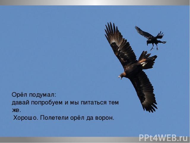 Орёл подумал: давай попробуем и мы питаться тем же. Хорошо. Полетели орёл да ворон.