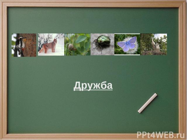 Проверка Дерево, дрозд, друг, дивный, дергать, дневник, длинный, диван, дыра, дорогой, деревянный, дождь, далекий, дешевый, доска, дружить, дневной, делать, дать, день, достать, деловой, делить, дружный, дождевой, держать, дворник, дышать, долина, дожить
