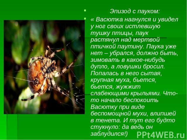 Эпизод с пауком: « Васютка нагнулся и увидел у ног своих истлевшую тушку птицы, паук растянул над мертвой птичкой паутину. Паука уже нет – убрался, должно быть, зимовать в какое-нибудь дупло, а ловушки бросил. Попалась в него сытая, крупная муха, бь…