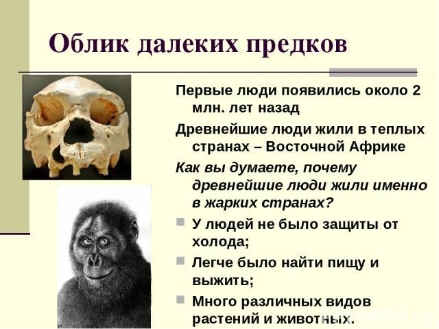 Облик далеких предков Первые люди появились около 2 млн. лет назад Древнейшие люди жили в теплых странах – Восточной Африке Как вы думаете, почему древнейшие люди жили именно в жарких странах? У людей не было защиты от холода; Легче было найти пищу …