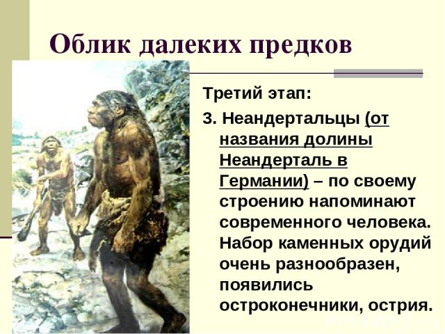 Облик далеких предков Третий этап: 3. Неандертальцы (от названия долины Неандерталь в Германии) – по своему строению напоминают современного человека. Набор каменных орудий очень разнообразен, появились остроконечники, острия.