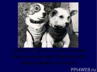 Белка и Стрелка стали первыми биокосмонавтами, благополучно вернувшимися на Земл
