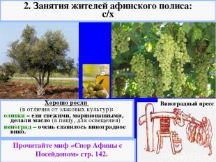 Виноградный пресс Хорошо росли (в отличии от злаковых культур): оливки – ели све