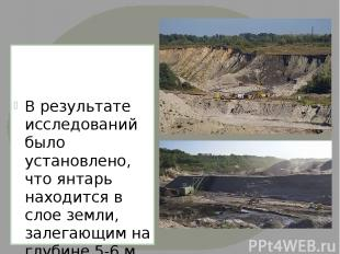 В результате исследований было установлено, что янтарь находится в слое земли, з