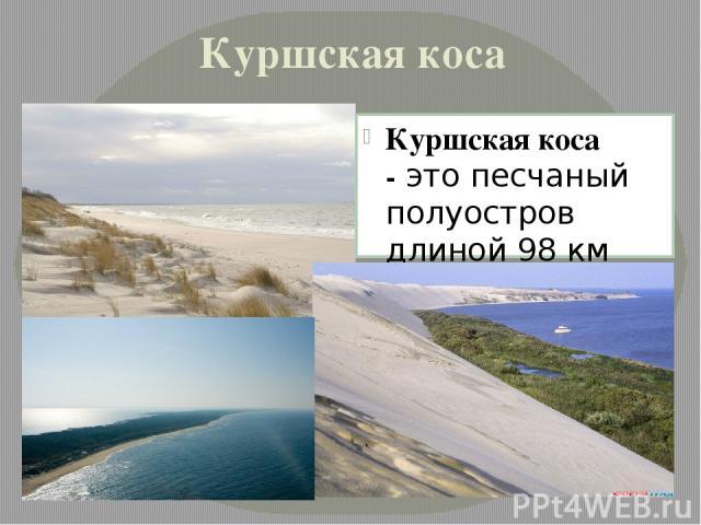 Куршская коса Куршская коса -это песчаный полуостров длиной 98 км (российская часть - 48 км), шириной от 400 м до 4 км.